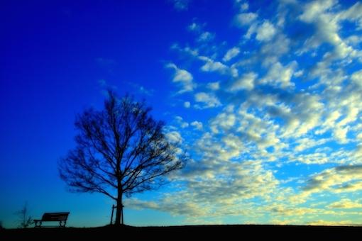 ベンチと樹と空