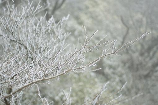 雪化粧の枝