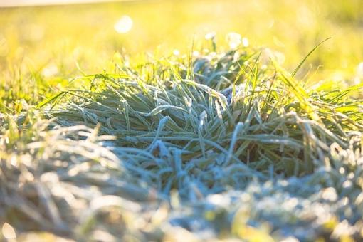霜が降りた草