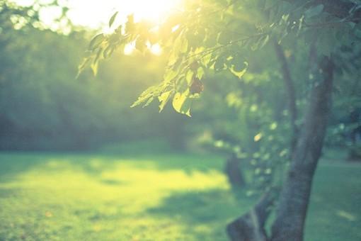 葉と陽の光