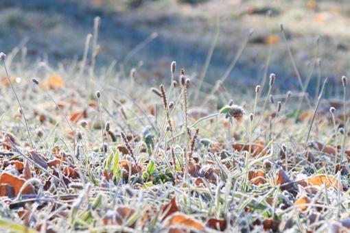 霜が降りた野原