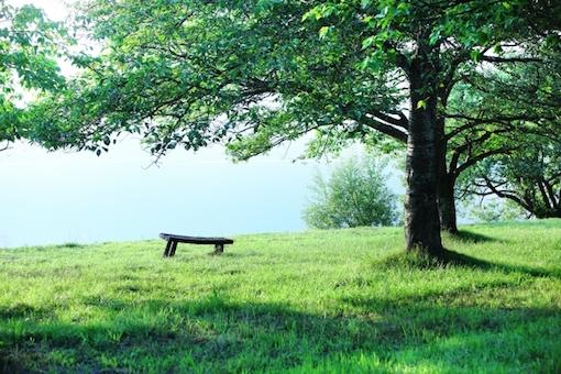 新緑の木立とベンチ