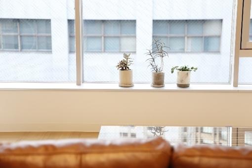 窓際に並ぶ観葉植物
